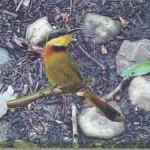 India Bird Kgn