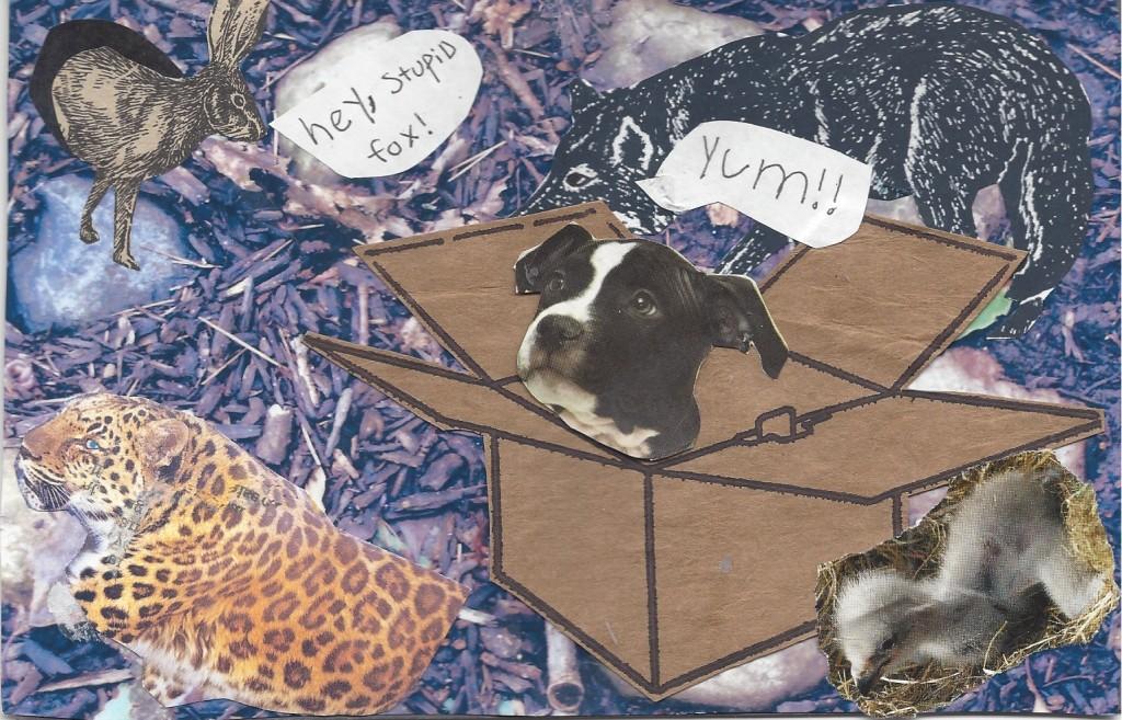 Mila - Boston Terrier in a box