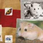 Nicholas escaped hamster