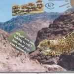 Sage Jaguar in the mountains.1st